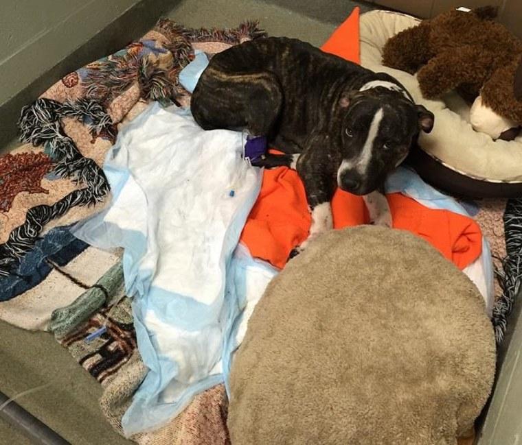 IMAGE: Cabela resting at Florida clinic