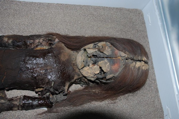 Unraveled: Why Chile's Chinchorro Mummies Are Turning into Black Ooze