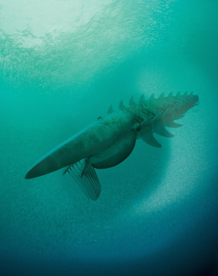 Image: An illustration of the anomalocaridid, a giant filter feeder that lived about 480 million years ago