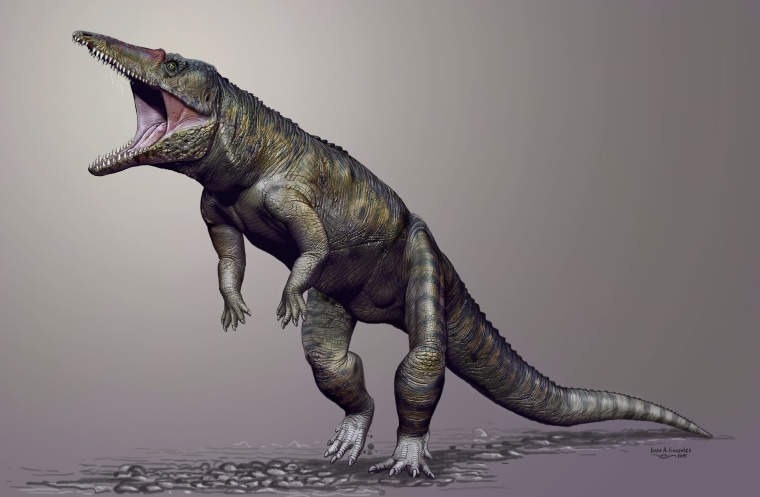 Before the Dinosaurs, 'Butcher' Crocodile Ruled the Earth