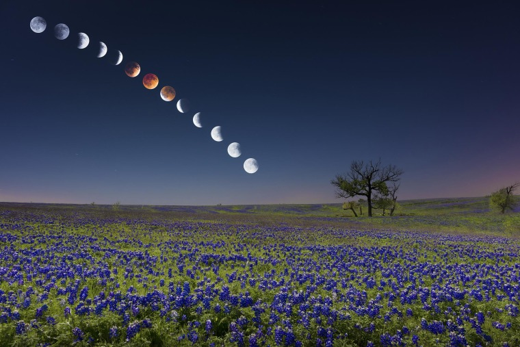 A Blood Moon Over Bluebonnets: The Lunar Eclipse in Texas