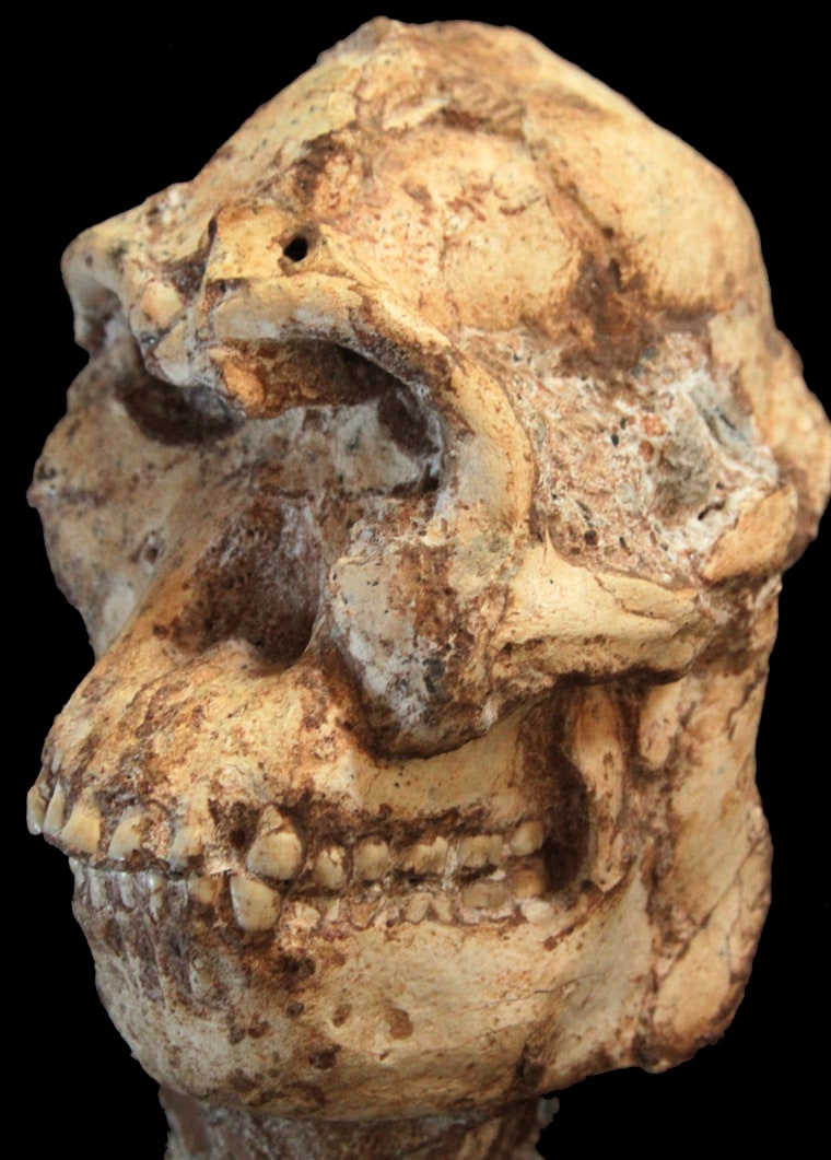 Little Foot and Lucy: Two Pre-Human Species Co-Existed, Scientists Say