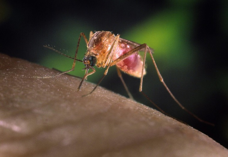 Can West Nile Virus Keep Making You Sick?