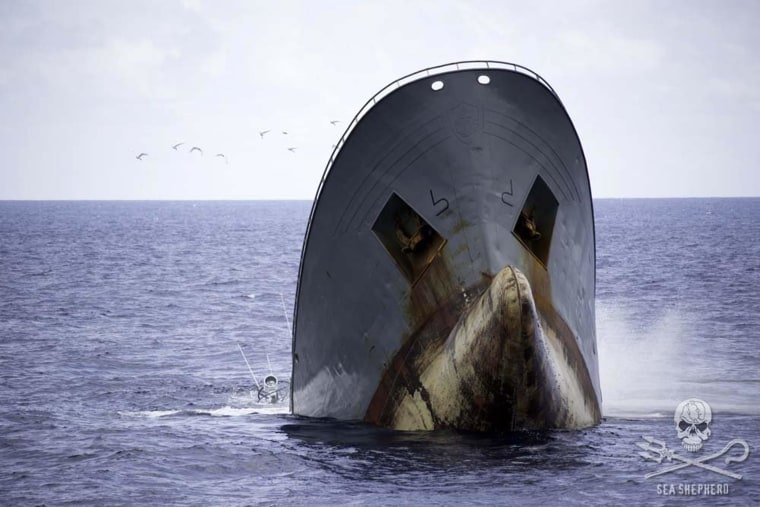 The Thunder, said by Sea Shepherd to be a poaching vessel, sinks, bow-up, on April 6.
