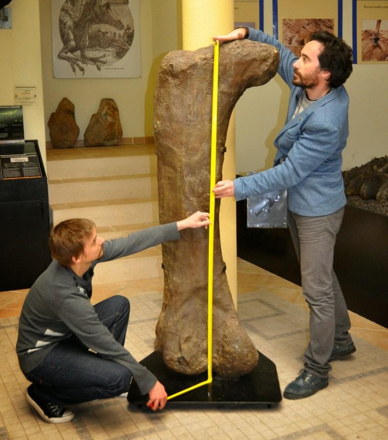 Image: Measuring femur