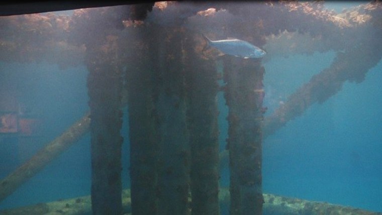 Fish in the Islands of Steel exhibit at Texas State Aquarium were devastated by an adverse reaction to medication.