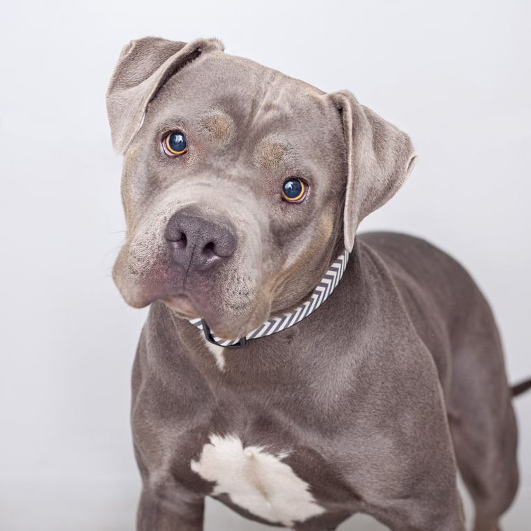 Roxy, a pit bull terrier, was left at a shelter in Los Angeles before she got paired with a teenage boy with Asperger syndrome.