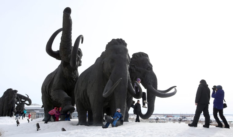 Scientists Want to Bring Back Woolly Mammoths — But Why?