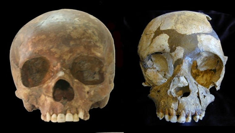 Image: Neanderthal and Paleolithic human skulls