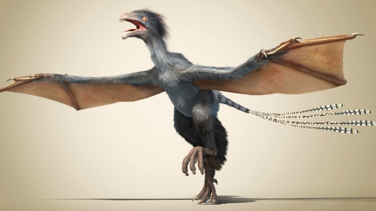 Image: Artist's impression of the new dinosaur Yi qi.