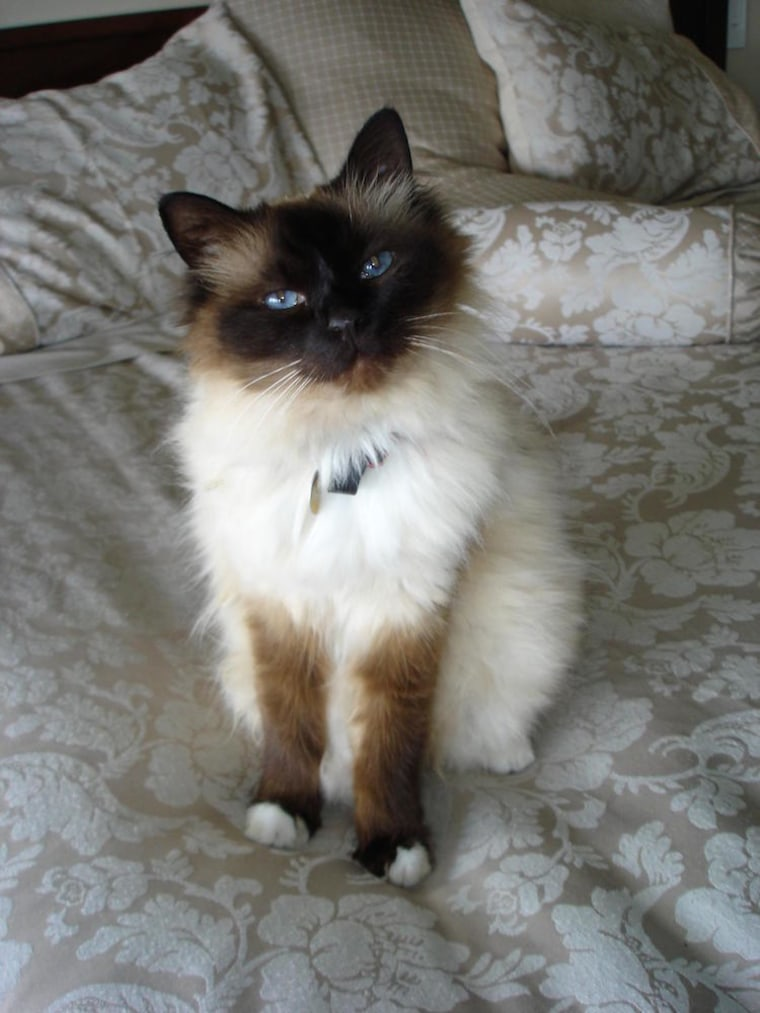 Image: A 16-year-old cat that experiences feline audiogenic reflex seizures