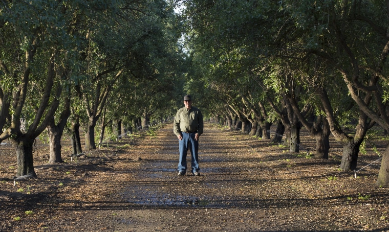 Tom Rogers stands between rows of the oldest almond trees on his 175 acre farm.