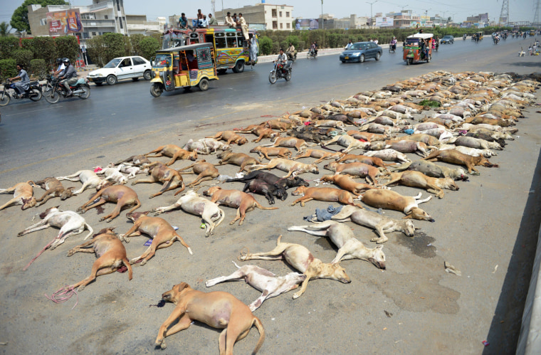 Image: Dog carcasses lined up on the side of the road
