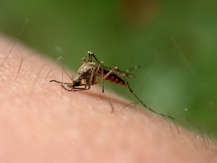 'Natural' Mosquito Repellents Don't Last, Group Finds