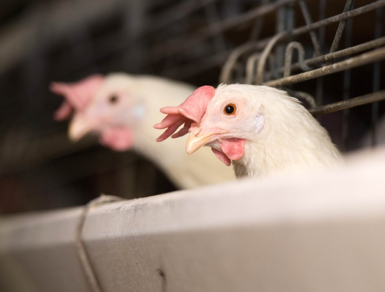 Prices for eggs are rising as an outbreak of bird flu in the Midwest claims an increasing number of chickens.