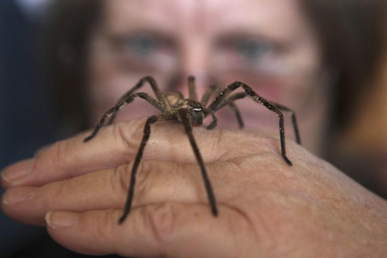 Image: A harmless Rain Spider