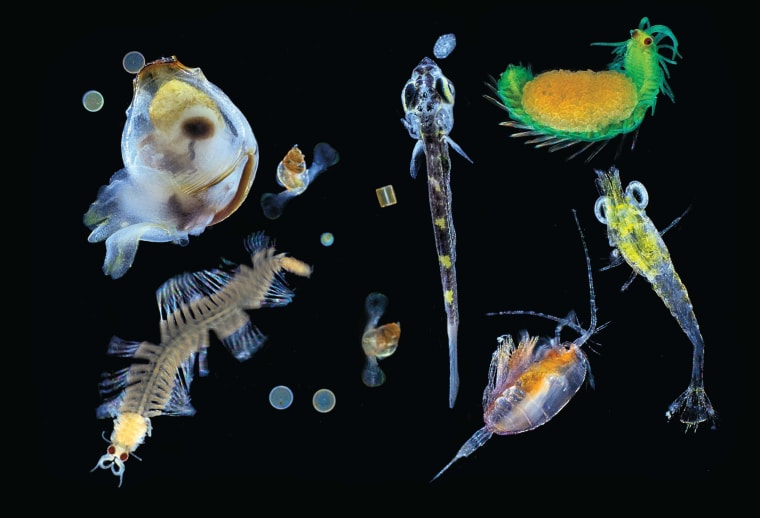 Image: Plankton