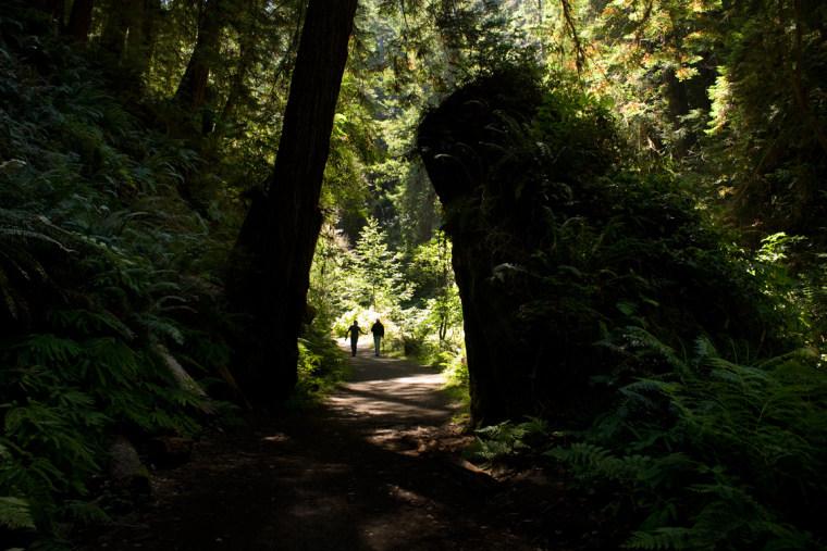 A gorgeous path through a forest.
