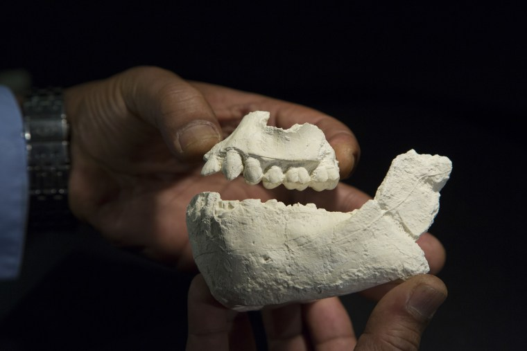 Different Species of Human Ancestor Lived Near Lucy, Scientists Say