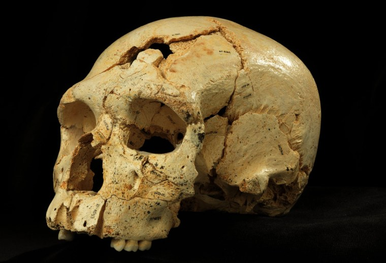 Image: Ancient skull with fractures