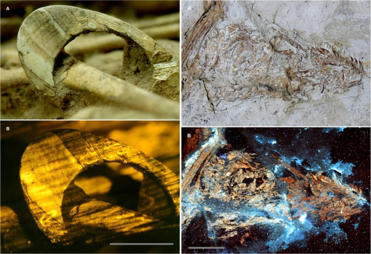 Laser-Powered Imaging Supercharges Dinosaur Fossil Finds
