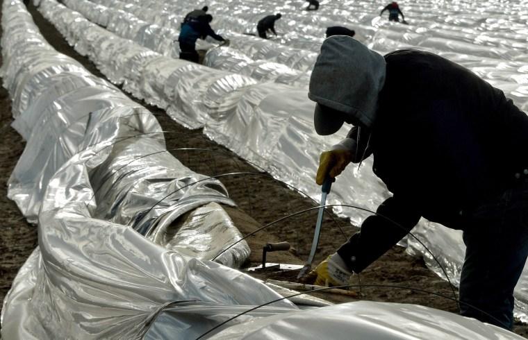 Image:  Asparagus harvesters in Kremmen, Germany on April 13