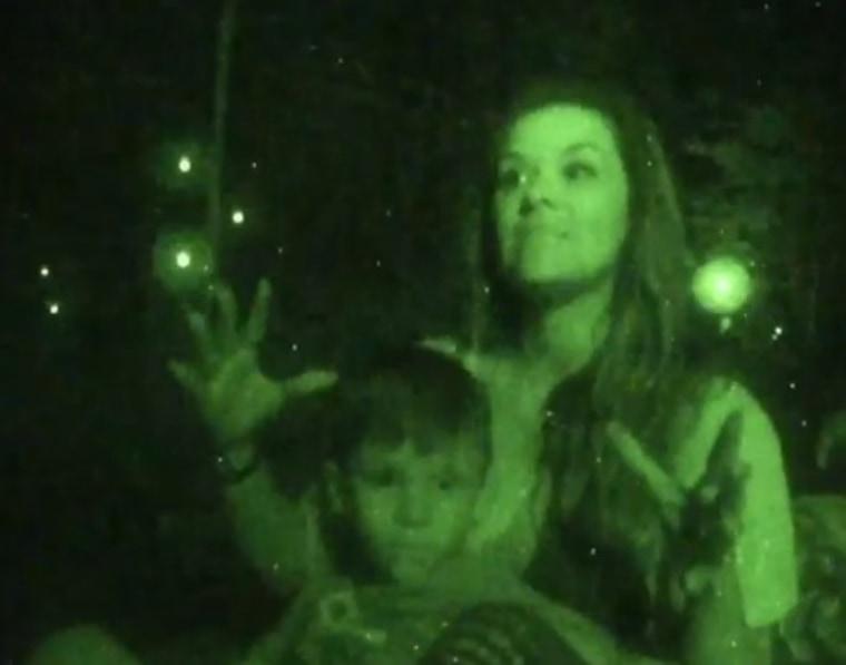 Image: Fireflies