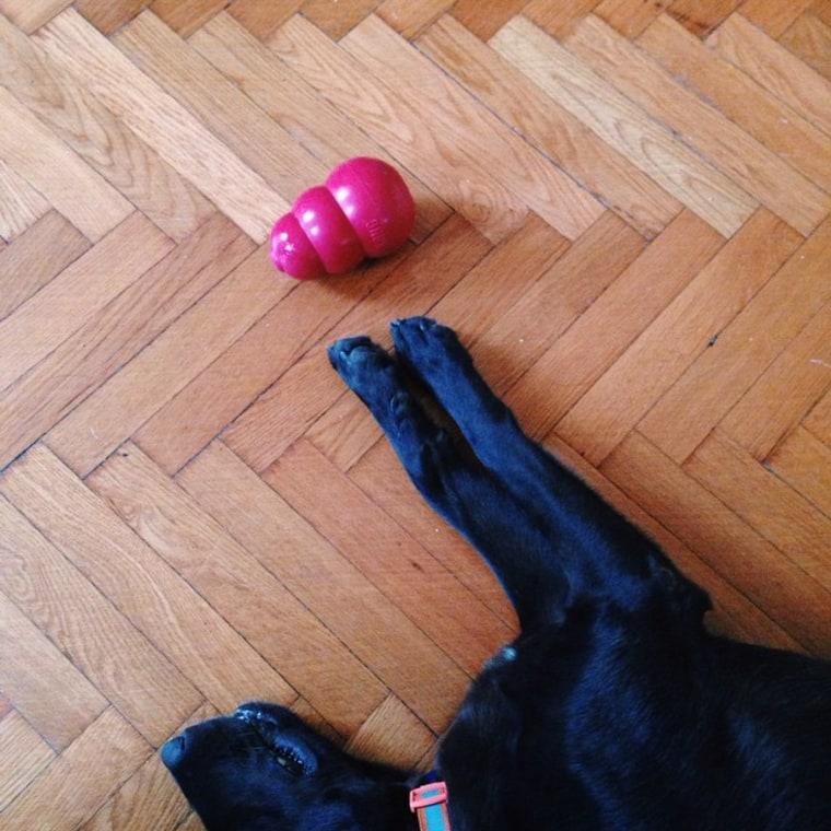 A dog and a Kong