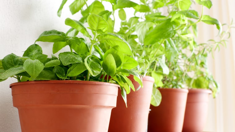 Potted herbs: Basil, Mint and Rosemary