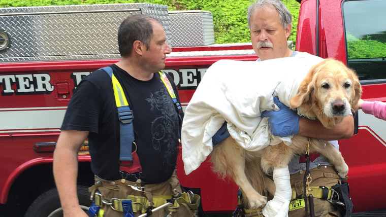 Brewster firefighters Pete Segretti and Marty Miller carry Figo, an injured guide dog into to Middle Branch Veterinarian