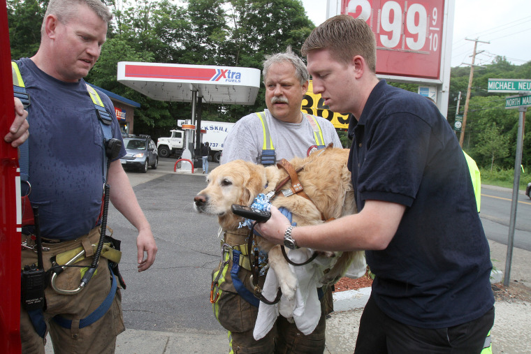 Brewster firefighter Marty Miller and store clerk Paul carry Figo, an injured guide dog to a fire vehicle for transport to Middle Branch Veterinarian