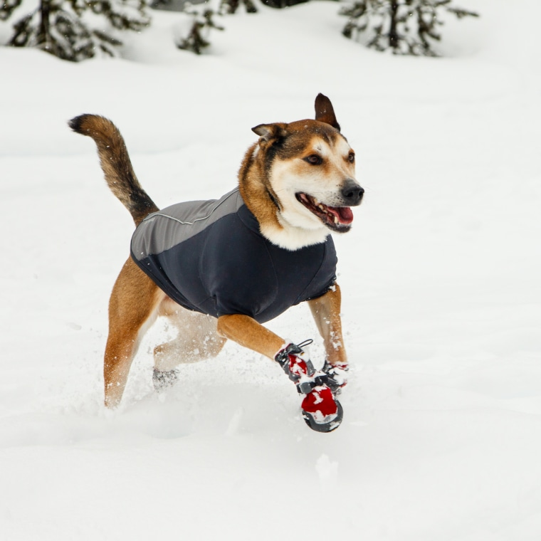 """""""Thank you for your unwavering belief in me,"""" Moon wrote in his eulogy to his dog, Denali."""