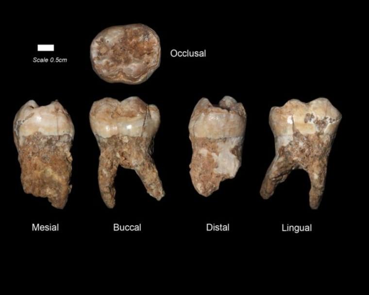 Teeth found in Qesem Cav