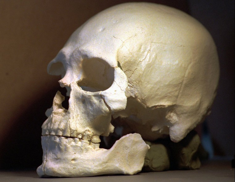 This1997 photo shows a plastic casting of the skull from the bones known as Kennewick Man.