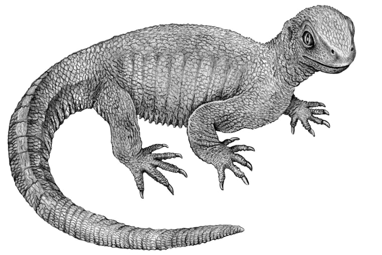 Illustrative reconstruction of Pappochelys rosinae.