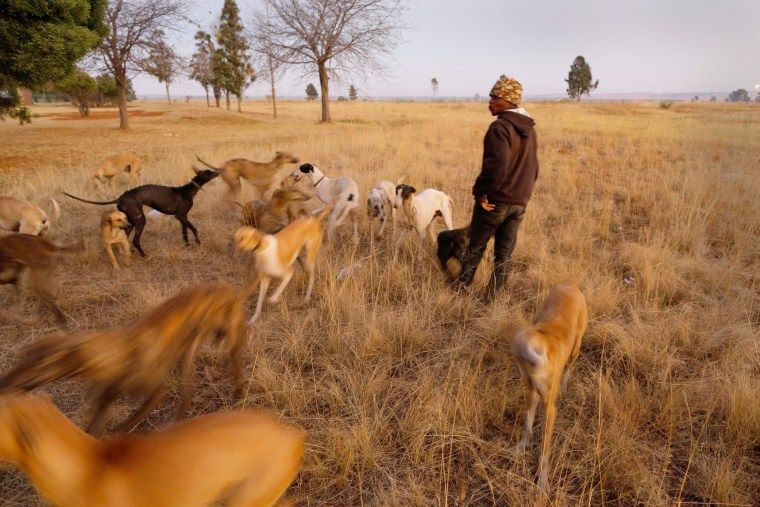 Image: Township Dog Hunters
