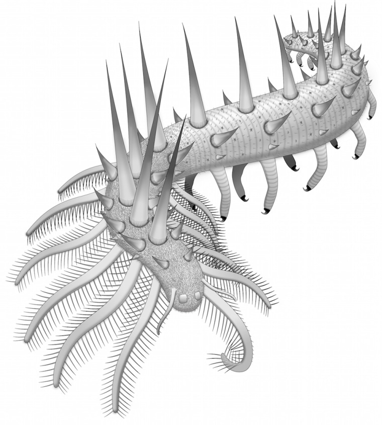 Illustration showing the many legs and spikes covering the early Cambrian creature.