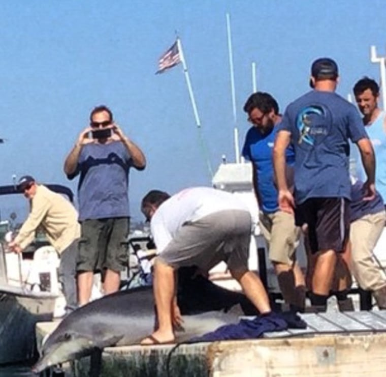 People trying to get dolphin that jumped into a family's boat back into the water.