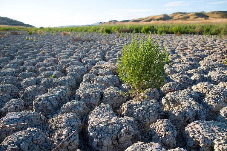 Image: The lakebed of Lake San Antonio is dry as the California drought enters its fourth year.