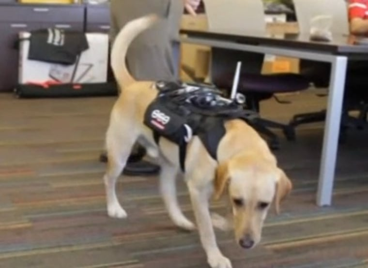 Image: Dog equipped with smart harness