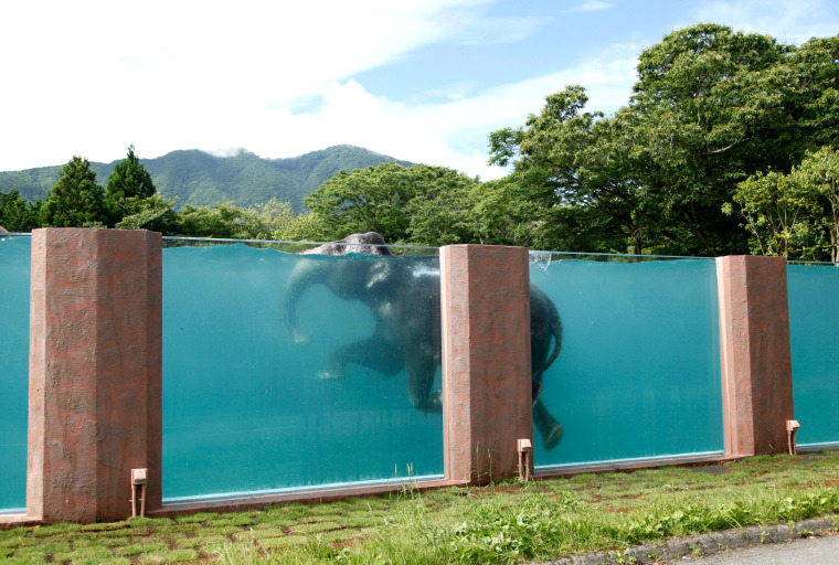 A park's message to the Japanese: Yes, elephants can swim.