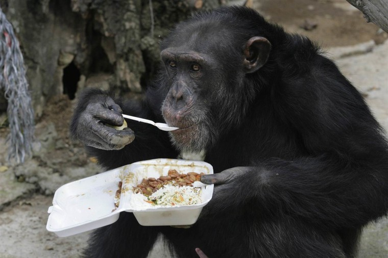 IMAGE: Chimpanzee in 2009