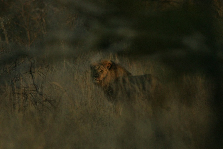 Jericho was spotted alive and well, after he too was rumored to be shot by illegal hunting.