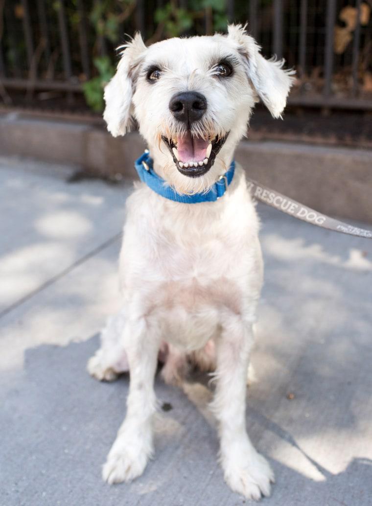 Senior rescue dogs up for adoption
