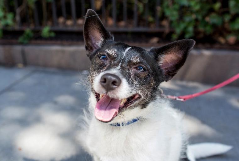 Senior rescue dog up for adoption
