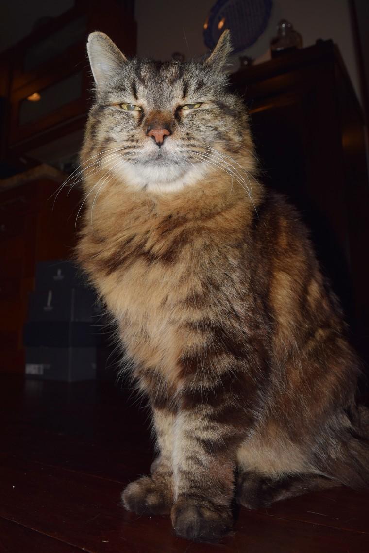 World S Oldest Cat Corduroy