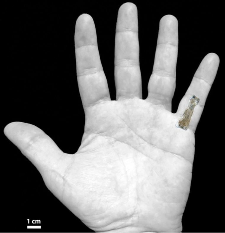 Image: Human hand