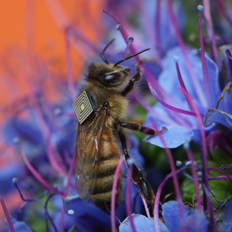 High-Tech Bee Backpacks Could Help Track Hive Collapse