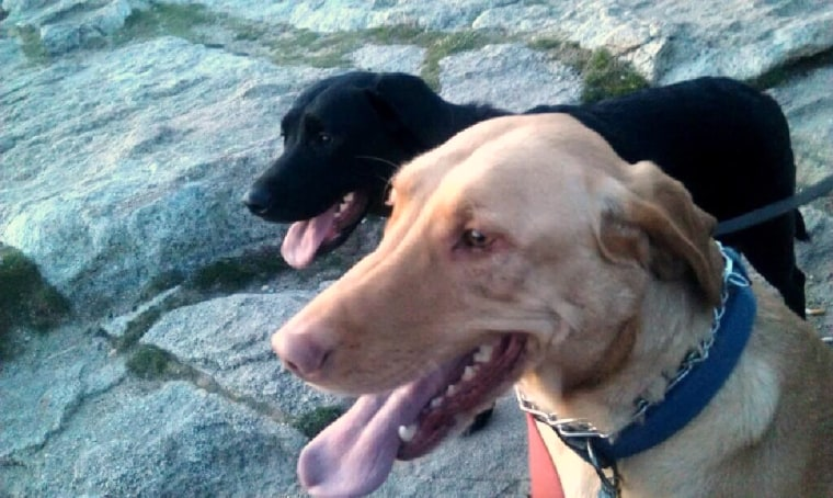 Image: Paden McCormick was burned trying to rescue his dogs Dexter (back) and Dahlia (front).
