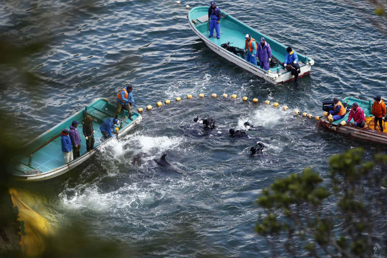 Image: Fishermen in wetsuits hunt dolphins at a cove in Taiji